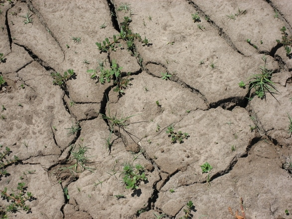 Droughts, Insurance And Your Home's Foundation